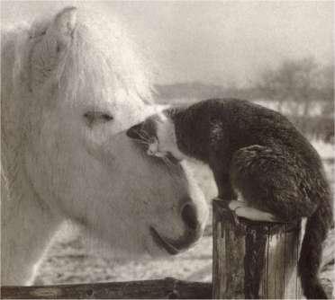 best-friends.jpg