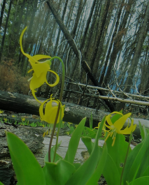 orchideen_kanada.jpg