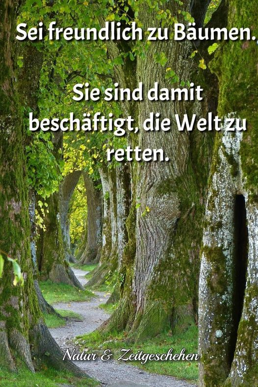 b__ume_retten_die_welt.jpg