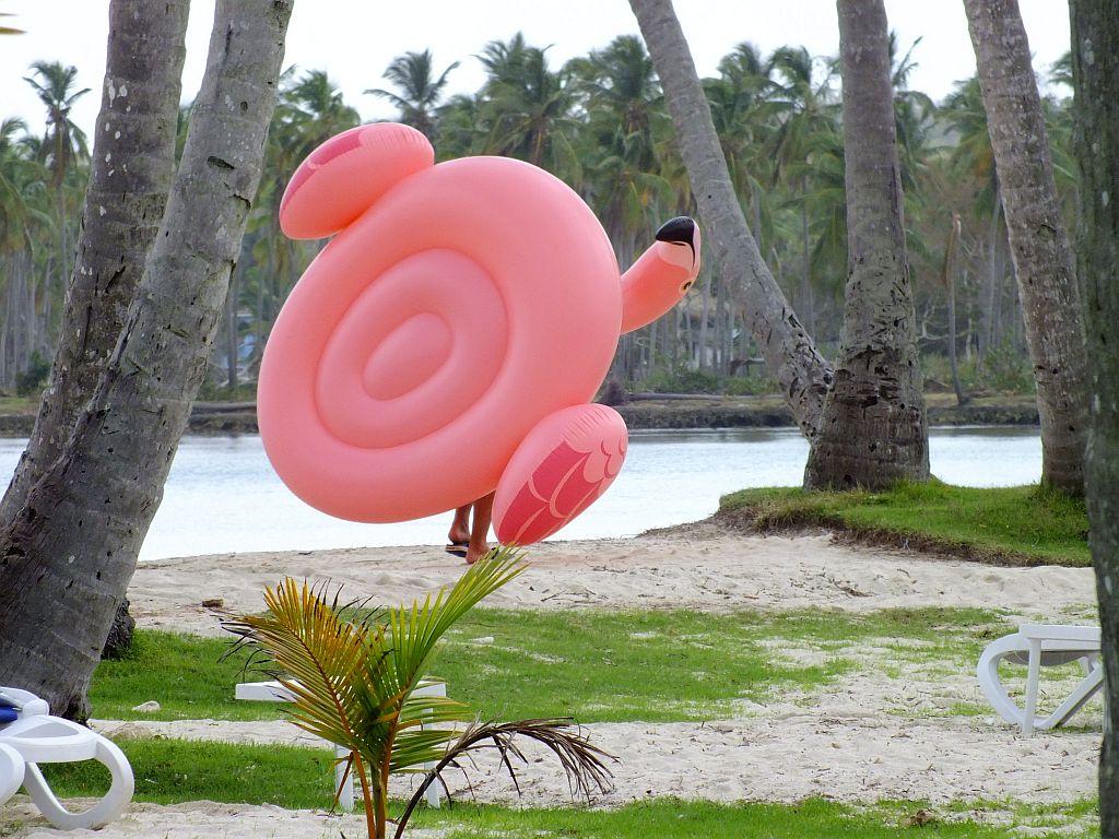 rosa_flamingo.jpg