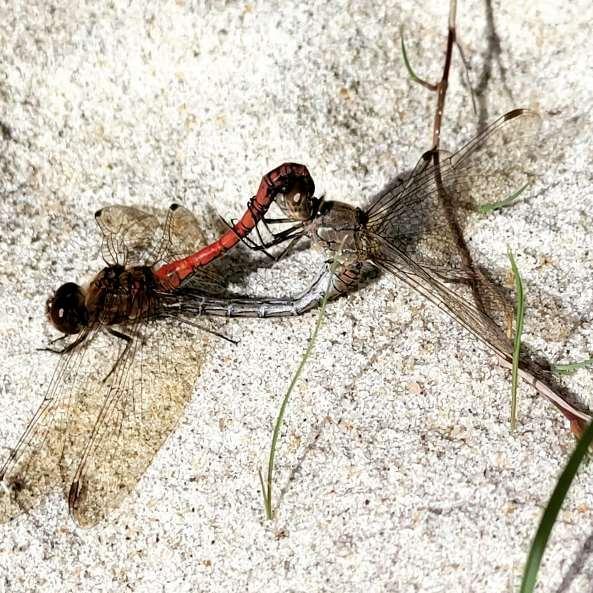 insektenl.jpg