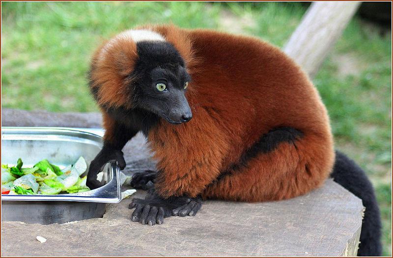 lemuren_01.jpg