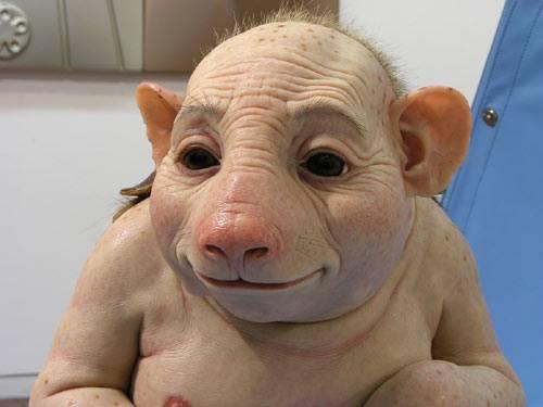 schweinegrippe3.jpg