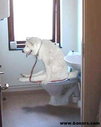 hunde_training.jpg