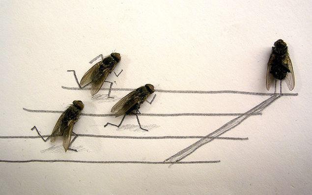 fliegen4.jpg
