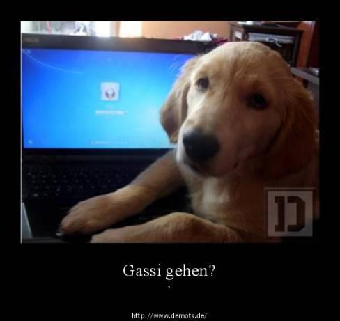 100_100_787769786_gassi_gehen_przez_tysa....jpg