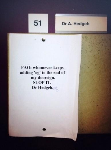 dr_hedgeh400.jpg
