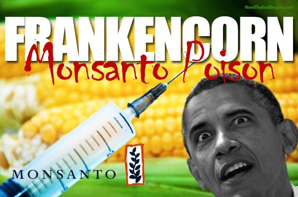 obama-signs-monsanto-protection-act-gmo-corn-....jpg