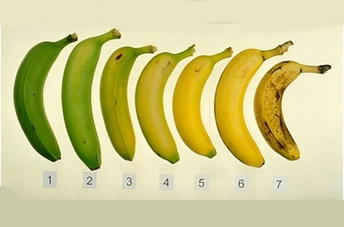 gr__ne-oder-reife-banane-500x330-500x330.jpg